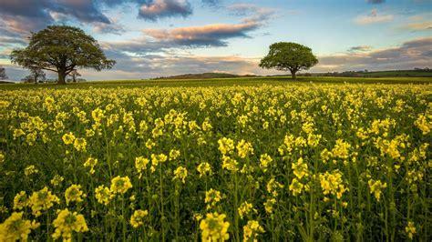 strauch mit weißen blüten die 74 besten gelbe hintergrundbilder