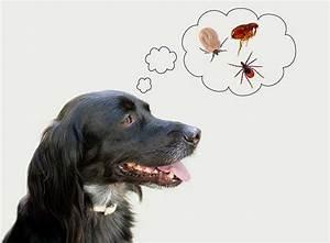 Puce De Chien : mon chien a des puces ~ Melissatoandfro.com Idées de Décoration