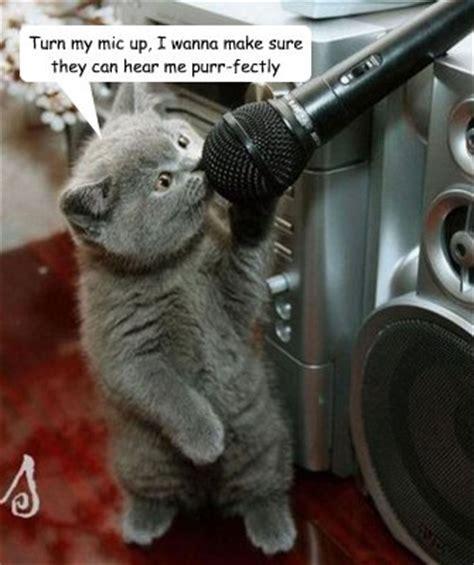 Singing Cat Meme - singing cat memes quickmeme