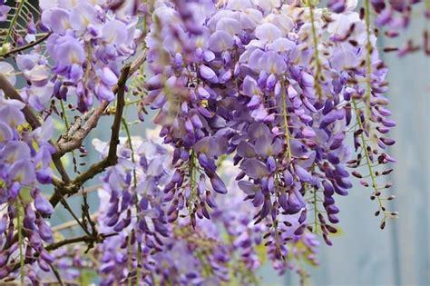 common flowers   poisonous toxic flowers