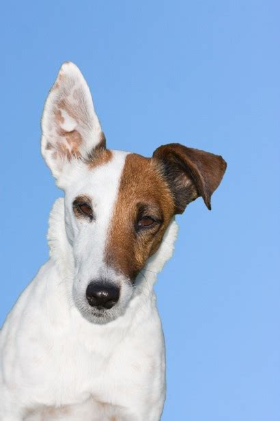 cute dog portrait  stock photo public domain pictures