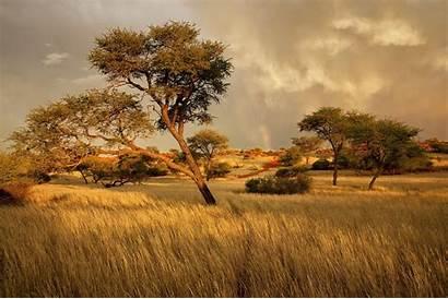 Africa Landscape Trees Nature Savanna Grassland Tree