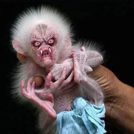funnycutecool  amazing animals funny monkey