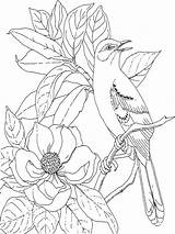 Coloring Magnolia Flower Flowers Printable Recommended Colors sketch template