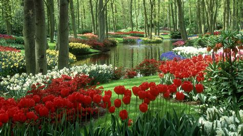 1920x1080 beautiful tulips garden spring flower paradise full hd wallpaper and background image 1920x1080 id 208617