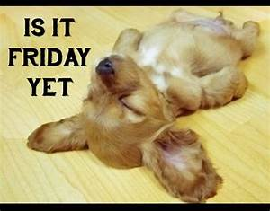 puppy quotes funny -Is it Friday yet??That is totally me ...