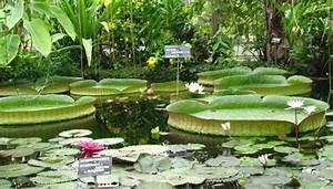 Jardin Botanique De Lyon : hors region le jardin botanique du parc de la t te d 39 or ~ Farleysfitness.com Idées de Décoration