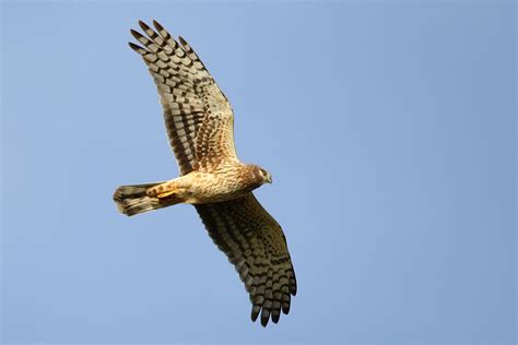 audubon society counts 220 bird species in san diego