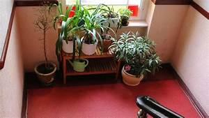 Pflanzen Im Treppenhaus : f r pflanzen berwinterung im hausflur genehmigung holen wohnen ~ Orissabook.com Haus und Dekorationen