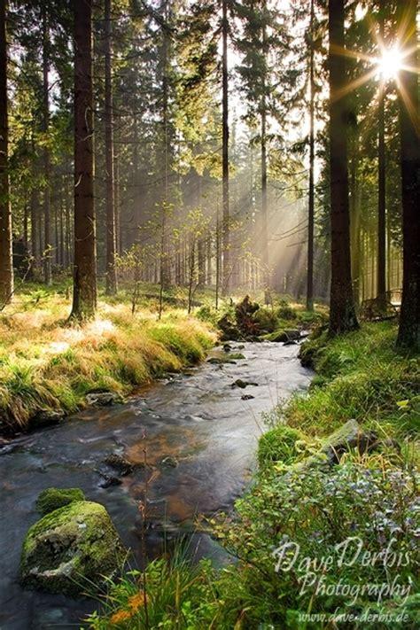 illumination forest harz national park dave derbis
