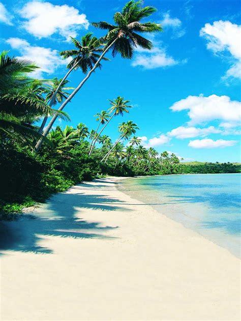 xft nuages bleu ciel palmier cote mer plage dete