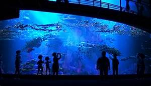 Pixar L39heure Mineure Under The Deep Deep Sea