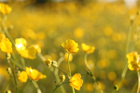 images nature blossom field meadow prairie
