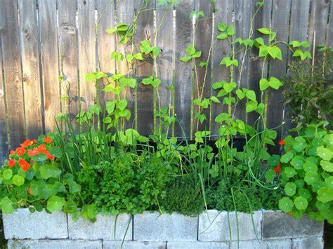 coin cuisine un petit potager quels légumes cultiver quelle surface