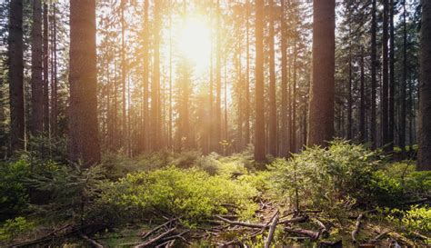 Natural Climate Solutions - World Business Council for ...