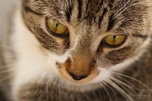 Random Warrior Cat Refs by MEREALii on DeviantArt