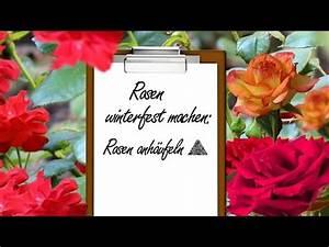 Rosen Winterfest Machen : rosen winterfest machen rosen anh ufeln youtube ~ Orissabook.com Haus und Dekorationen