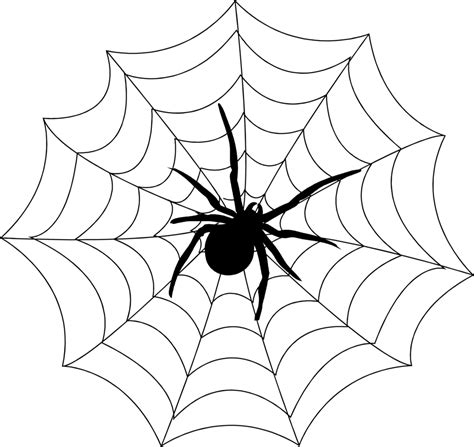 clipart web spider web spider free stock photo a spider on a spider