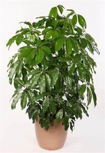 florist dallas locate find wholesale plants plantant