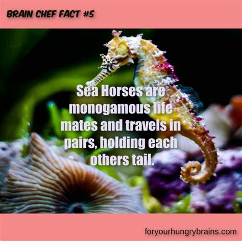 brain horses sea fact chef facts