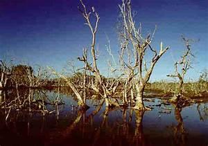 Kerusakan Hutan  Dampak Kerusakan Hutan Bakau Di Balik Papan