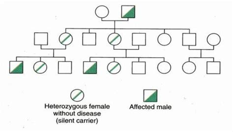 How Does A Person Inherit Color Blindness by X Linked Inheritance Genetics Generation