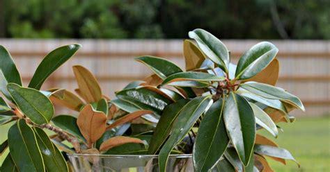preserve magnolia leaves diy magnolia wreath