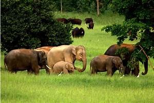 Asian Elephants Habitat   www.pixshark.com - Images ...