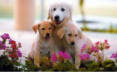 Puppy Dog Wallpapers Animals Walls