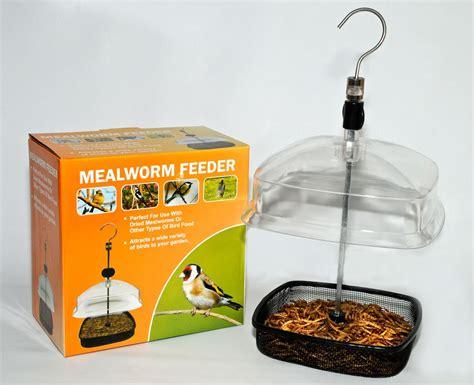 mealworm feeder twootz com