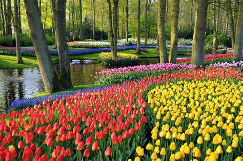 destinasi  eropa buat liat hamparan bunga tercantik