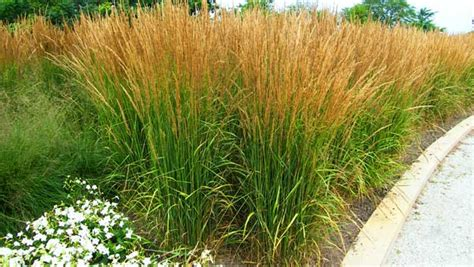 landscaping grasses photos incorporating ornamental grasses into your landscape zen of zada