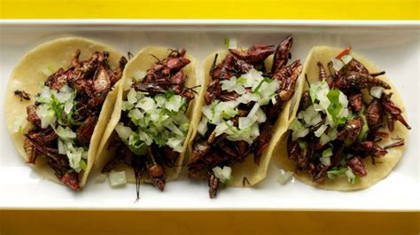 insecte cuisine philly makes room at the table edible insects and