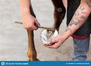 Farrier At Work On Horses Hoof Stock Image
