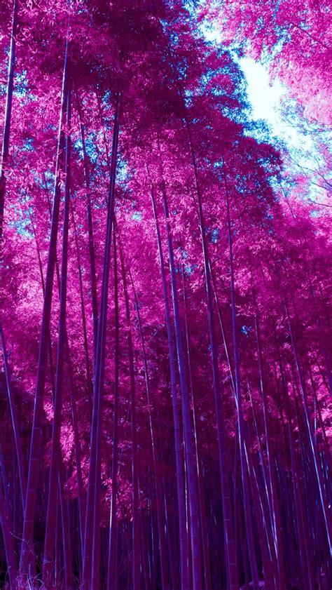 infrared arashiyama bamboo grove forest wallpapers hd