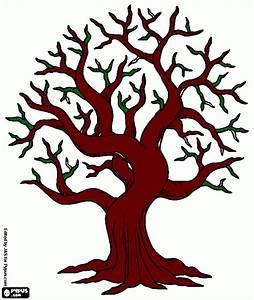 Levensboom Kleurplaat Pictures