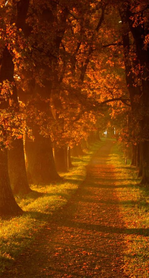 Fall Road Iphone Wallpaper by Awesome Autumn Wallpapers For Your Iphone Hd The Nology