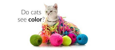 do cats see in color can cats see colors how cats see litter robot