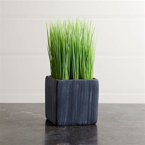 mini potted grass reviews crate  barrel