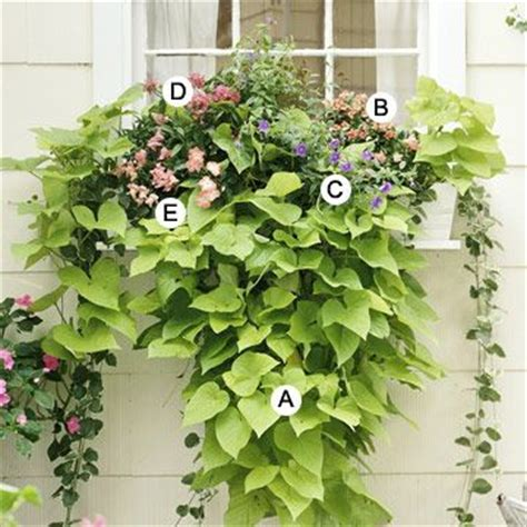 best 25 window planters ideas on window boxes