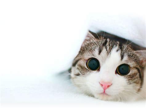 gambar kucing lucu  bakal bikin kamu gemes