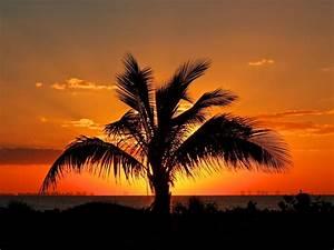 Bilder Von Palmen : bilder von palmen super sch ne bilder von palmen blauer sch ner fotos von meer natur palmen ~ Frokenaadalensverden.com Haus und Dekorationen