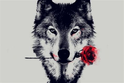 Computer Aesthetic Wolf Wallpaper by Aesthetic Computer Wallpapers Top Free