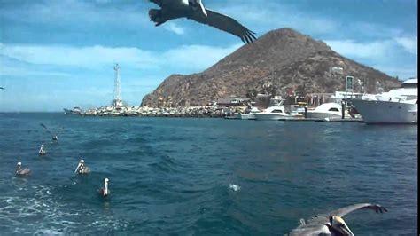 Sea Lion Boats by Sea Lion Boat Avi Youtube