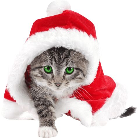 cat wearing christmas hat png image  png images