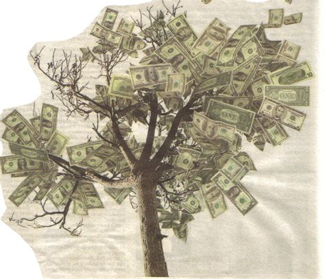 Images Of Money Tree The Lies Mks Believe 4 Money Grows On Condemned Sequoias
