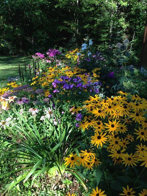 Sun Sun Garden by Best 25 Daylily Garden Ideas On Growing