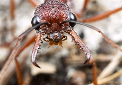ant pest control canberra canberra pest control act
