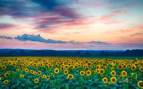 清新蓝天白云壁纸_美好的风景让人惬意_风景壁纸_精品库