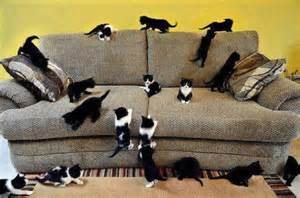 cat everywhere so many kittens pixdaus